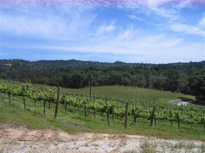 Vineyard Property in El Dorado and Amador Counties